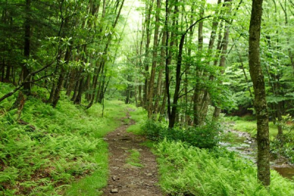 can't afford summer camp, hiking trails