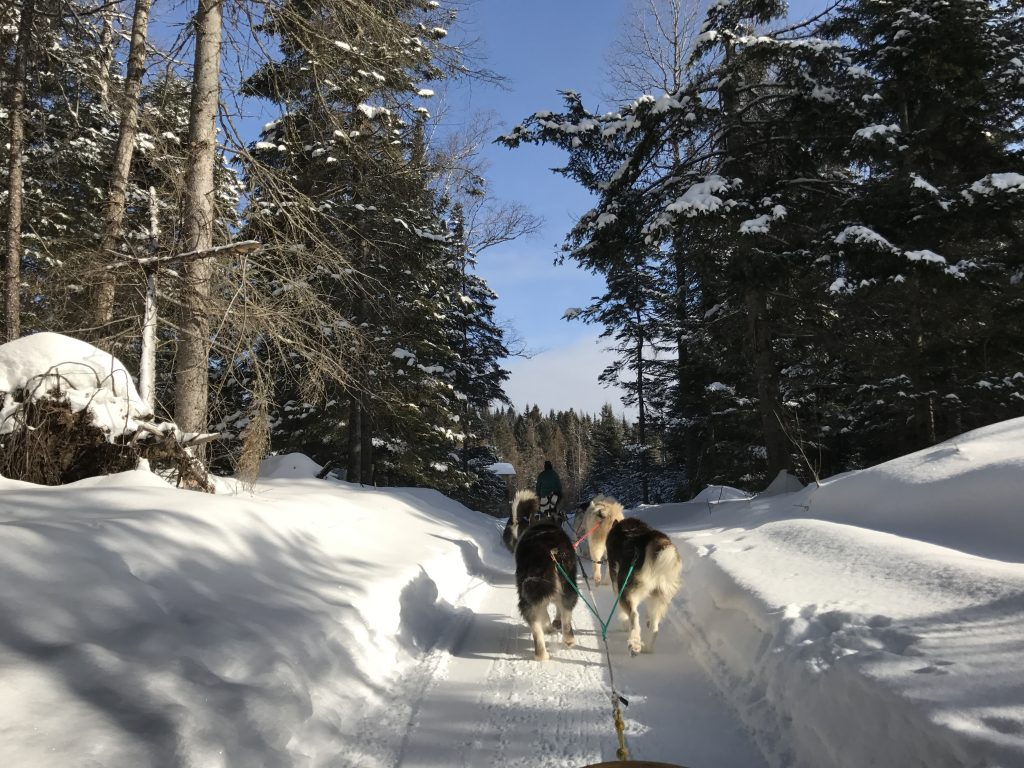 dogsledding in Mont Tremblant