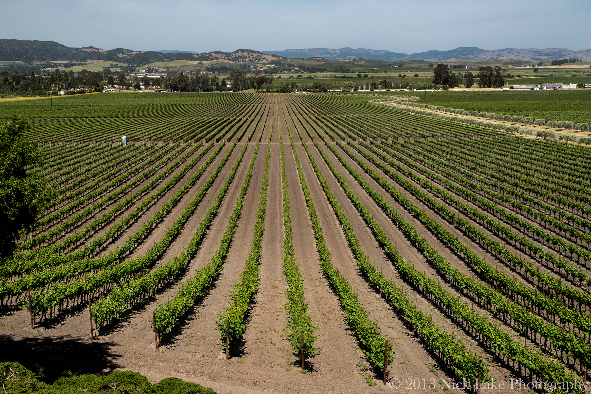 Vineyards stretch in every direction in Sonoma