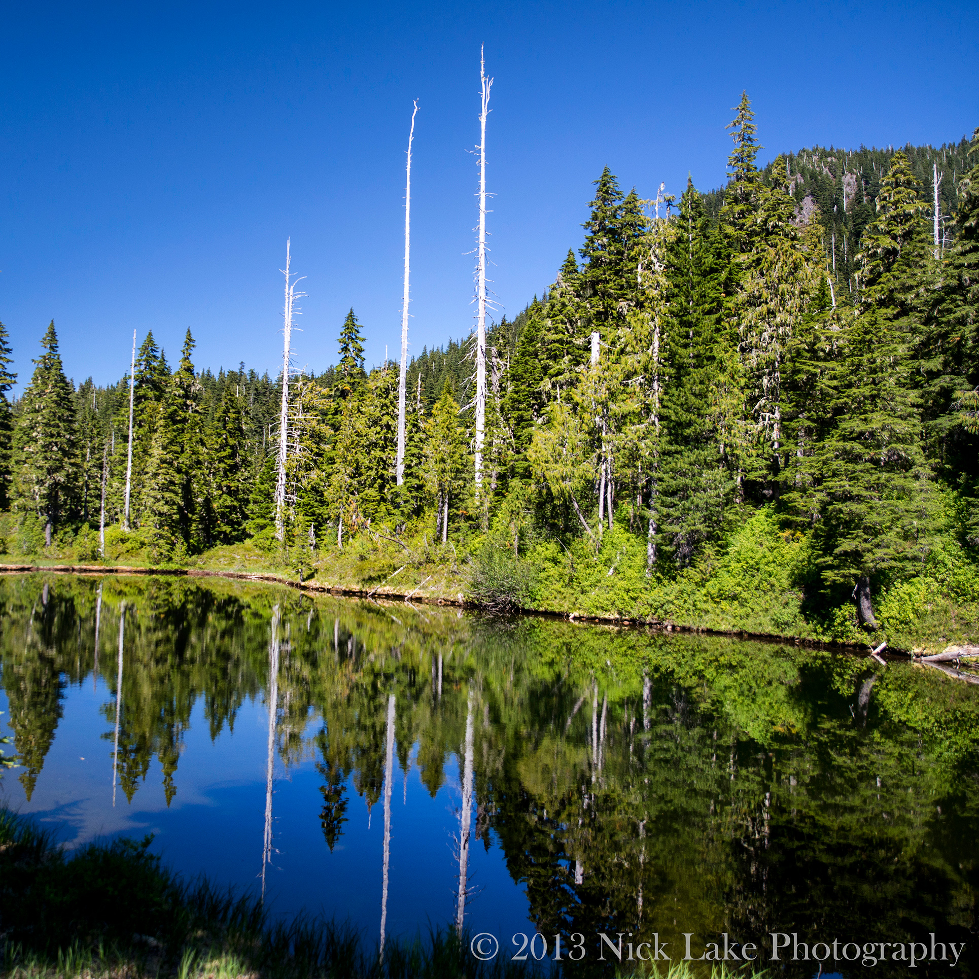 Dead Trees above Deer Lake Olympic National Park Washington