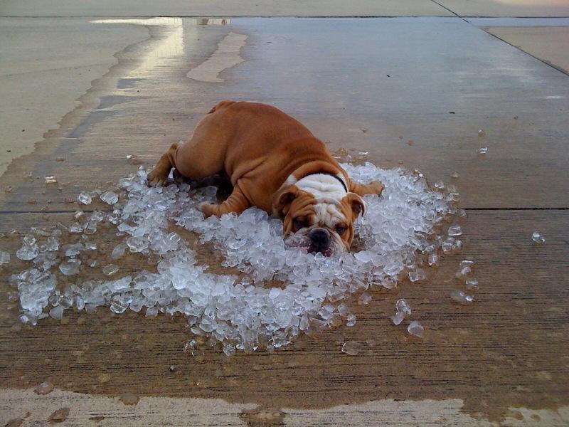 Резултат с изображение за dog hot weather