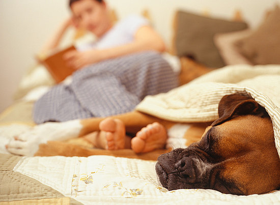When Dogs Snore - You Stay Up