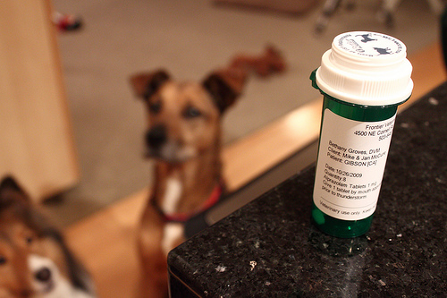 Can You Use Antibiotic Cream On Dogs