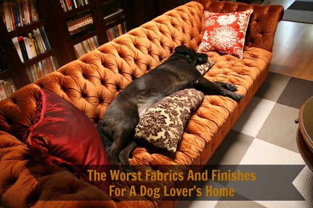 The Worst Fabrics And Finishes For A Dog Loveru0027s Home