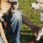 The four types of dogs and people you meet on walks – and how to master the situation every time