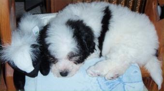 Benji sleeping