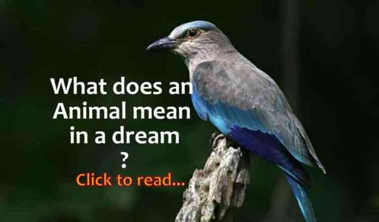 dreams about animals