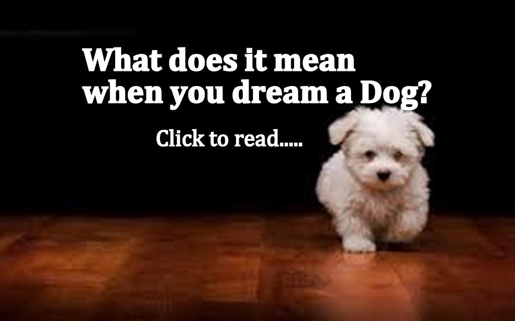 Dreaming Dog Meaning