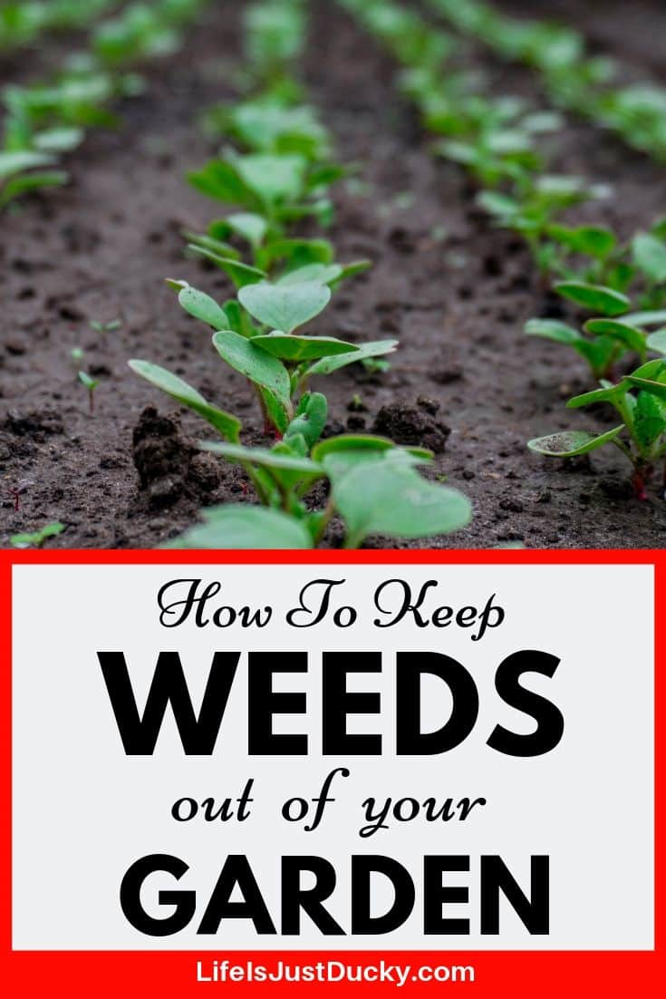 12 Ways To Make WEEDS - GO AWAY! - Naturally - Life Is Just
