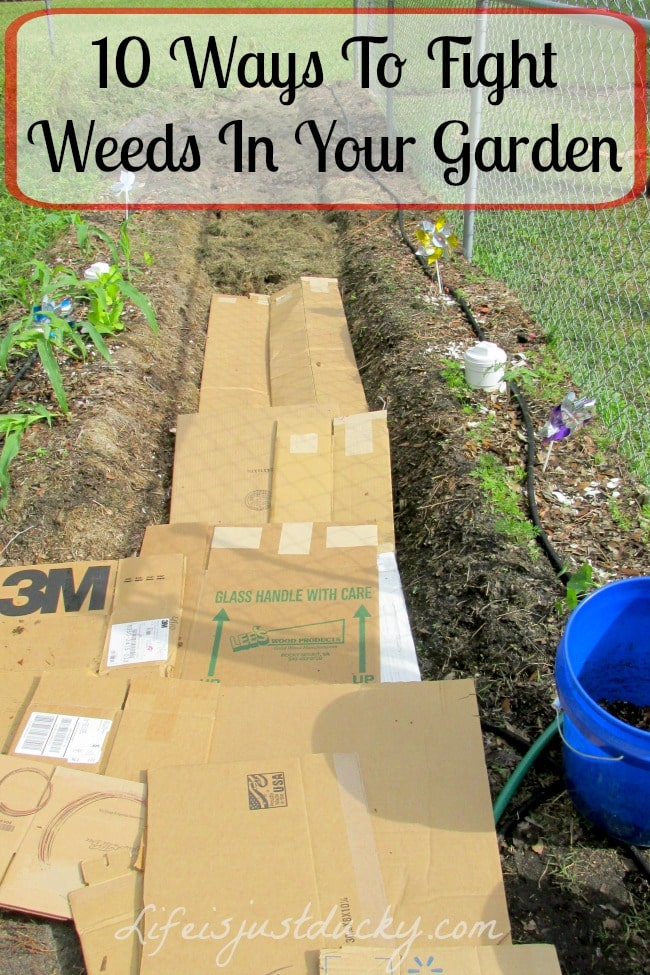 Ways To Mulch Your Raised Beds