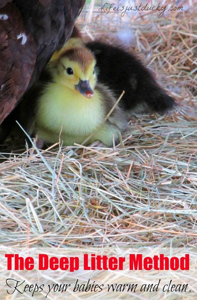 Deep Litter Duck And Chicken Run - Life Is Just Ducky