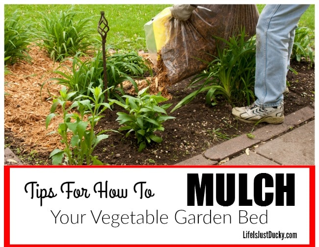 Mulch For Your Vegetable Garden - Life Is Just Ducky