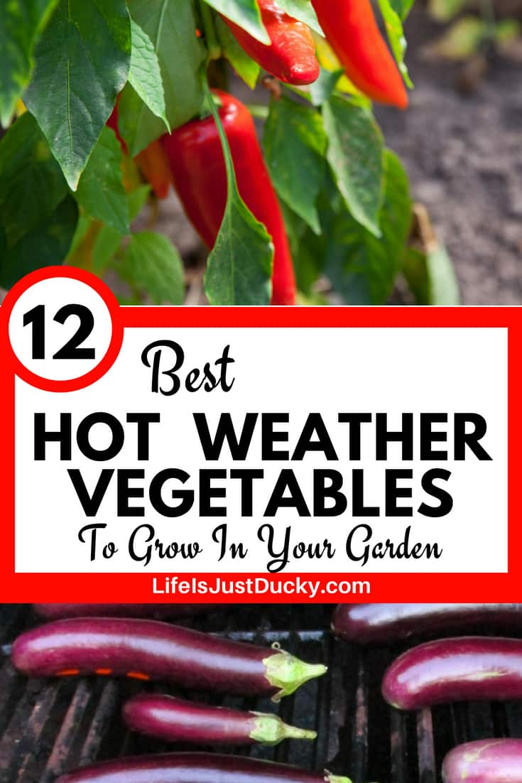 12 Vegetables To Plant In August Zone 9: 12 Best Hot Weather Vegetables To Grow In Your Garden