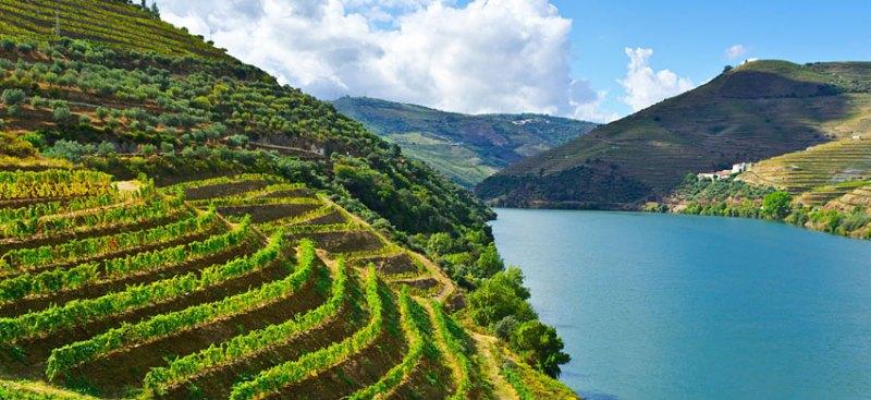 I MIGLIORI LUOGHI IN PORTOGALLO PER AMMIRARE IL FOLIAGE. Dalla Valle del Douro a Sintra, ecco dove vivere lo spettacolo della natura in terra lusitana