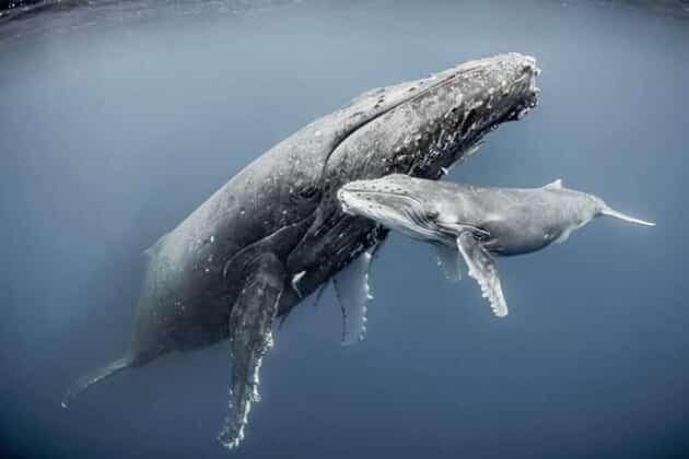 Jane Spilsbury è un'avvocata britannica. Dopo aver sentito storie di avvistamenti di balene in Kenya nelle acque davanti alla città di Watamu si è messa sulle loro tracce per provarne l'esistenza.