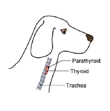 wellness_dog_geriatric-4