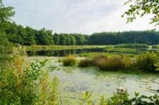Fietsen Friesland (1)