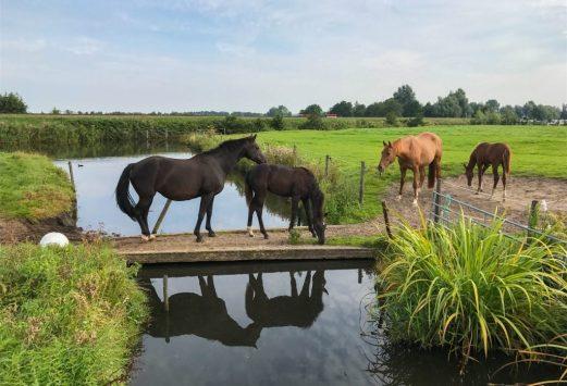 Fietsen Friesland (2)