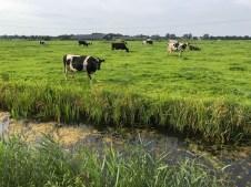 Fietsen Friesland (3)