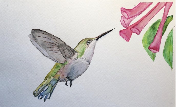 Hummingbird (watercolor on cold press paper, 8x10) - NFS