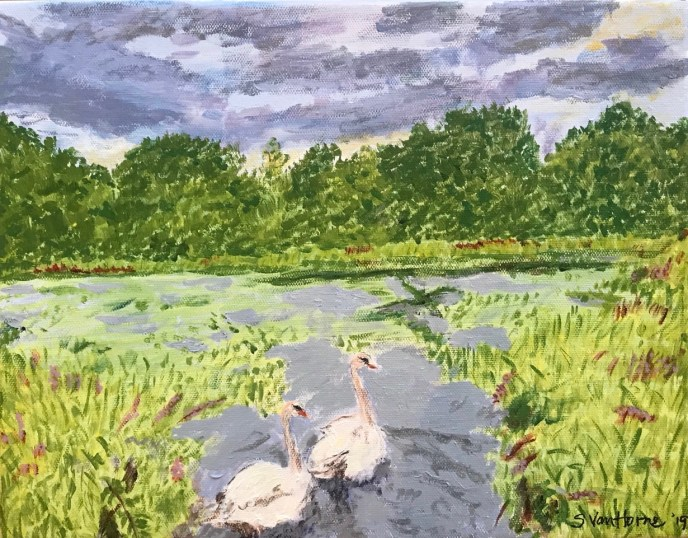 """Swans in Bristol Harbor"" (acrylic), $100"