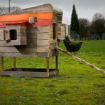 Chicken Coops…really?