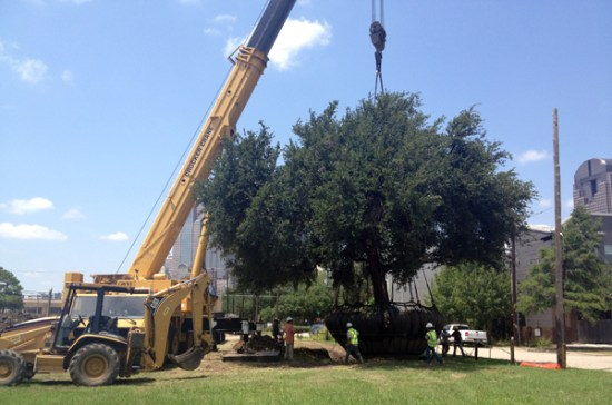 lifting the tree into position