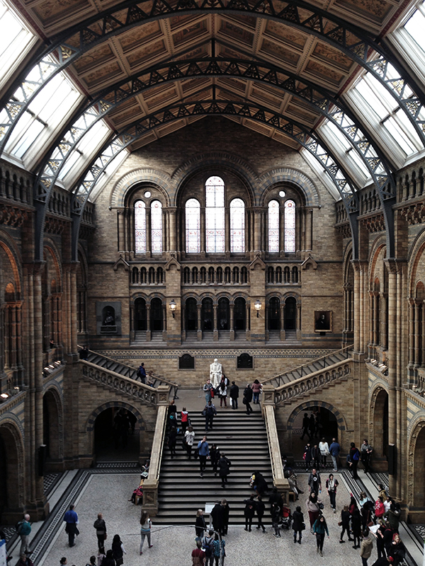 London Museum of Natural History central space