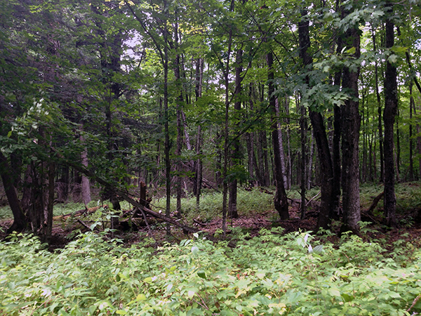 Wisconsin woods are scary