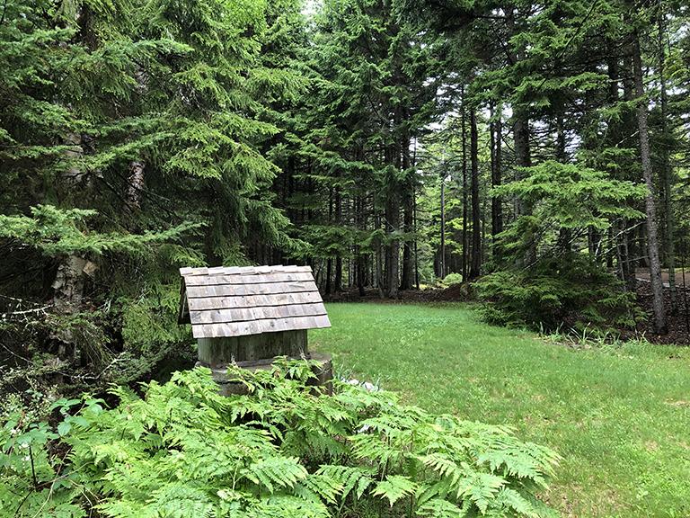 Maine front yard - photo by Bob Borson