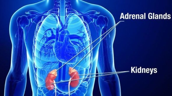 Adrenal Insufficiency Natural Treatment