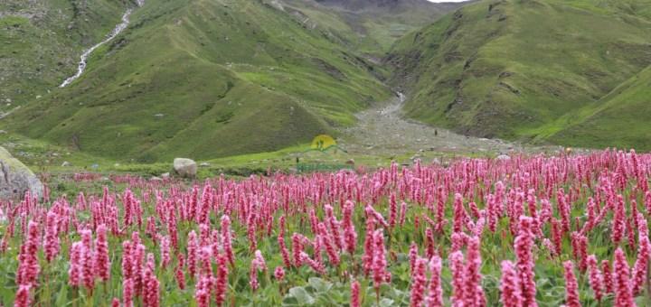 Pin Bhabha Pass Trek