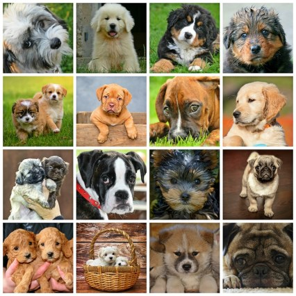 feature_puppy collage