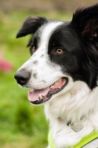 PTP body_happy dog