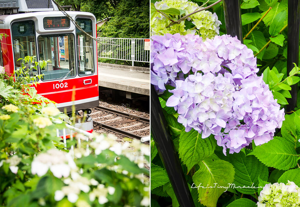 Hakone Tozan Railway Collage 2