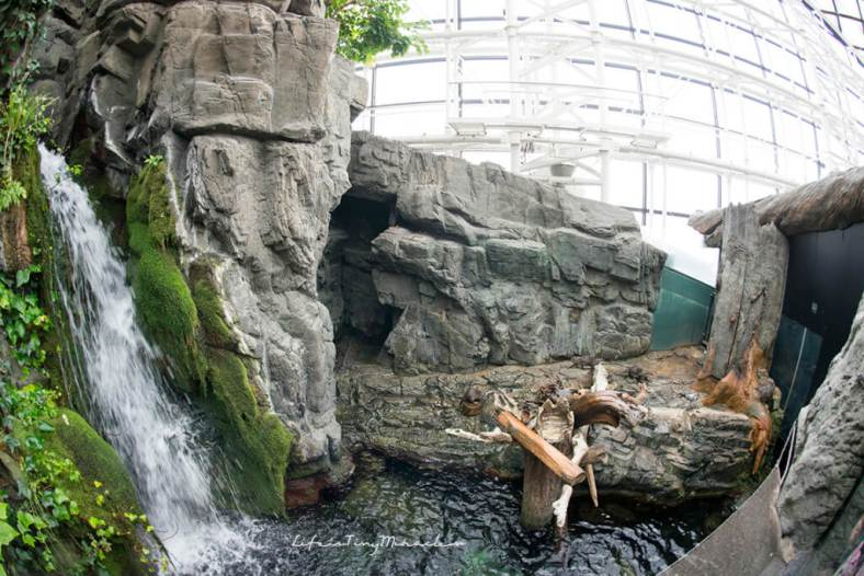 Osaka-Aquarium07