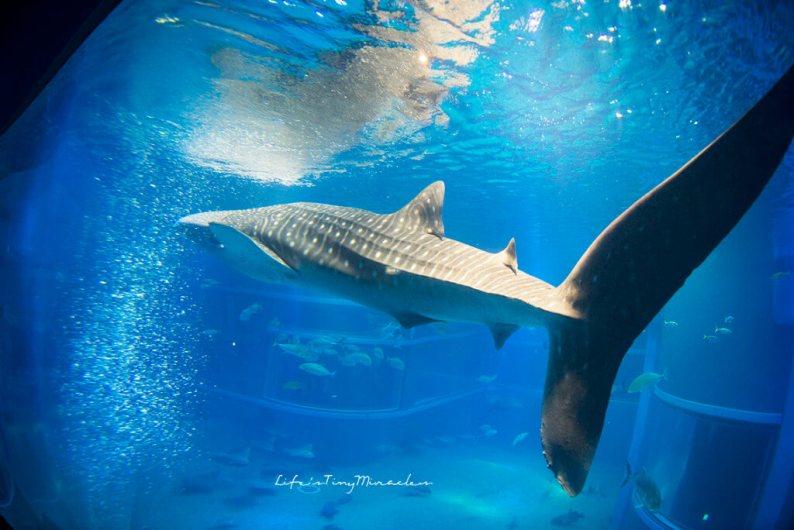 Osaka-Aquarium21