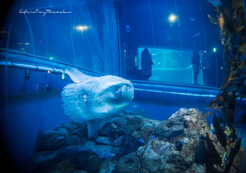 Osaka-Aquarium26
