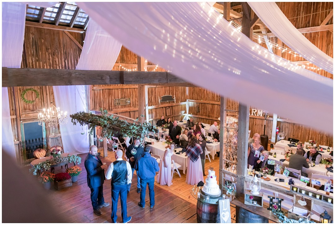 barn swallow farm indoors