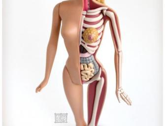 Barbie Anatomy Model by Jason Freeney