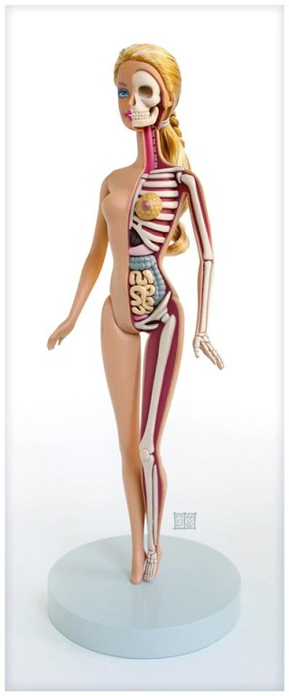 Barbie Anatomy Model by Jason Freeney