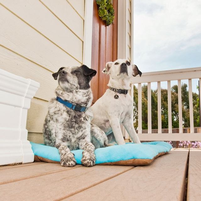 P.L.A.Y. Pet Lifestyle and You Chill Pad Blue