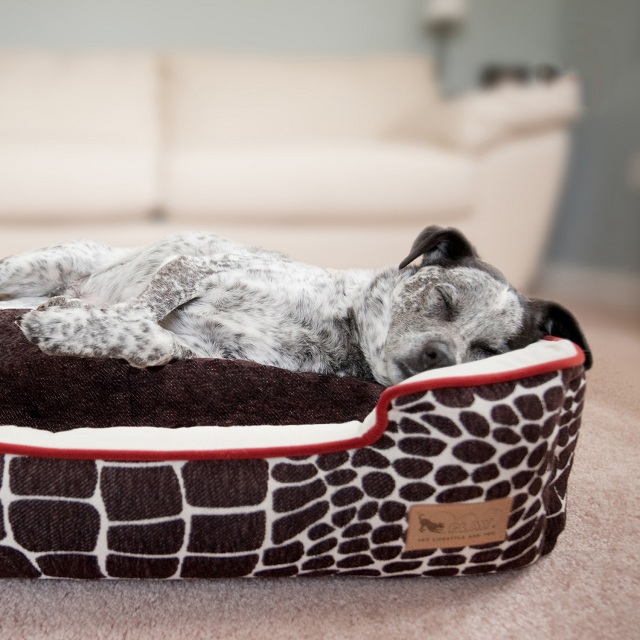 P.L.A.Y. Pet Lifestyle and You Lounge Bed Kalahari + Brown