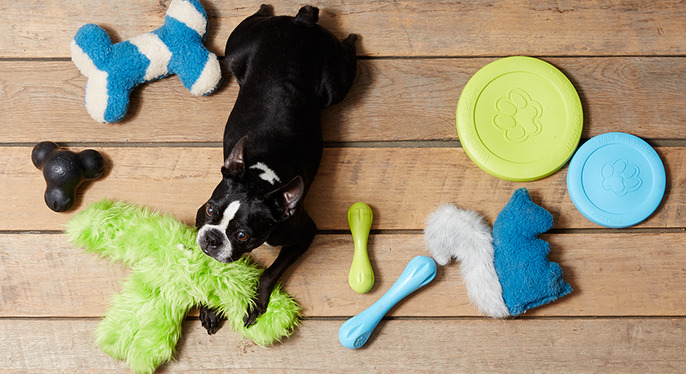 Pet Essentials: West Paw Design & More at Gilt
