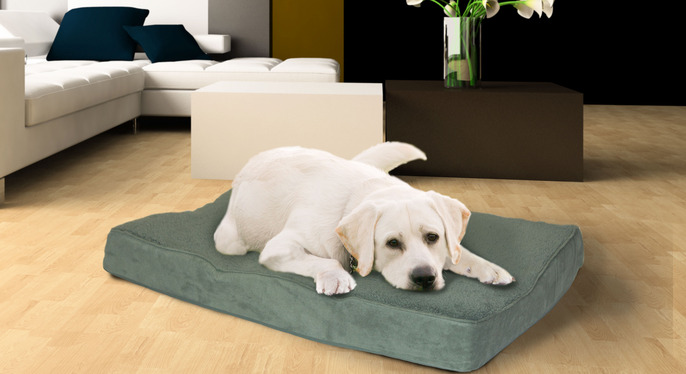 Doggie Daydream: Our Favorite Pet Beds at Gilt
