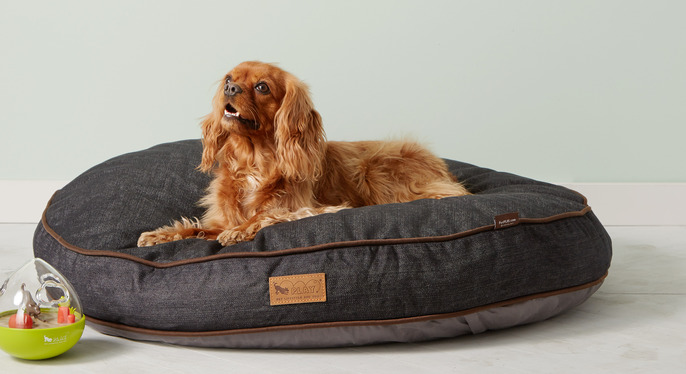 Our Pets' Picks Feat. P.L.A.Y. at Gilt
