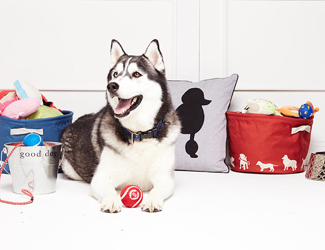 Pet Perfect: Beds, Carriers & More at MYHABIT
