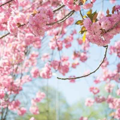 Easy Ways to Prepare for Spring Allergy Season