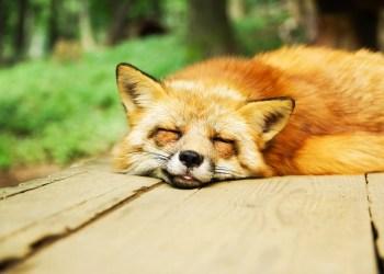 10 myths about sleep