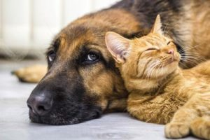 dog with family kitten